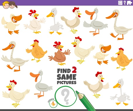 find two same farm birds educational game for children
