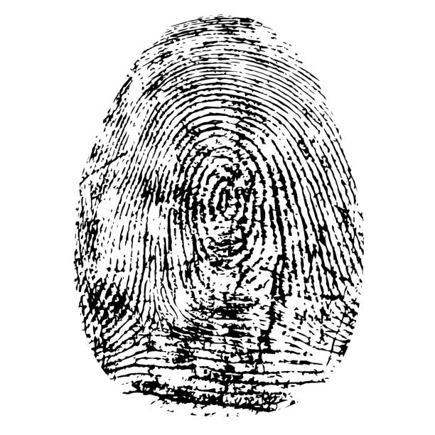 Fingerprint, silhouette vector. Dactylogram isolated on white background Fingerprint, silhouette vector. Dactylogram isolated on white background detective stock illustrations