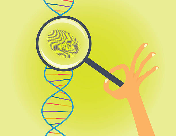 DNA fingerprinting and testing conceptual illustration. Hand with magnifier makes genetic research dna test stock illustrations