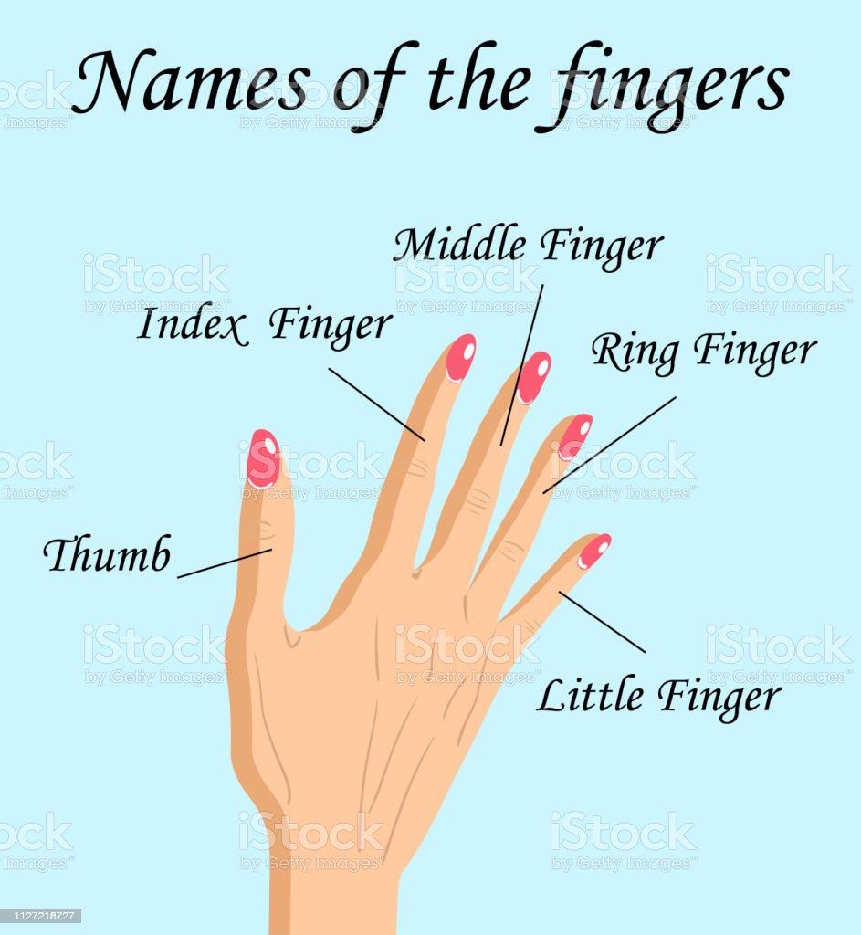 Fingers Names of Human Body Parts, a hand drawn vector cartoon...