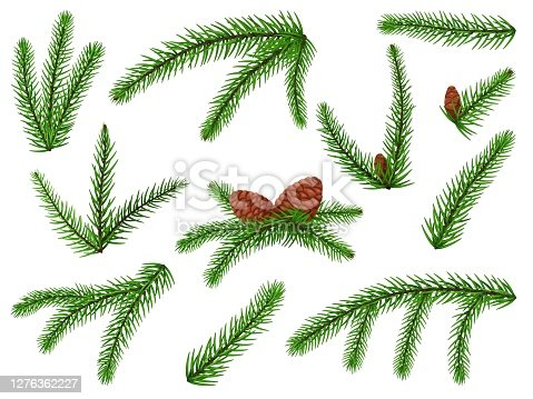 Fir branch. Christmas tree, pine sprig, conifer with cone. Lush fir branch holiday green decoration icon set isolated on white background. Vector evergreen forest plant twig element illustration