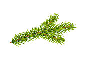 Fir branches, Christmas decoration, Vector illustration isolated on white background