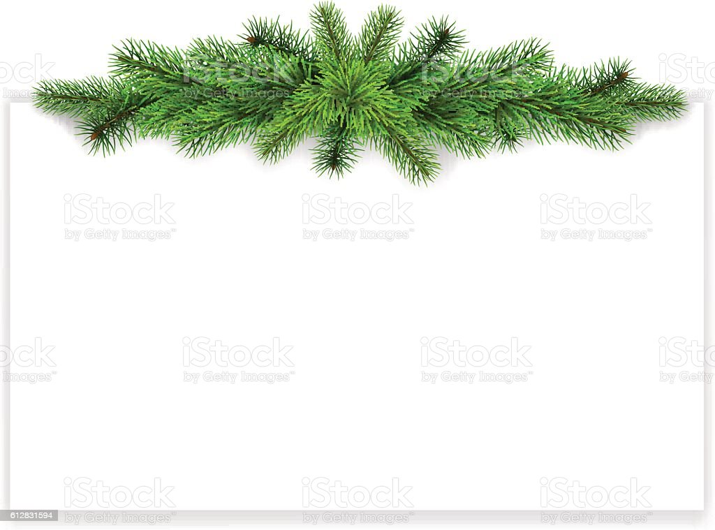 fir branches on empty sheet vector art illustration