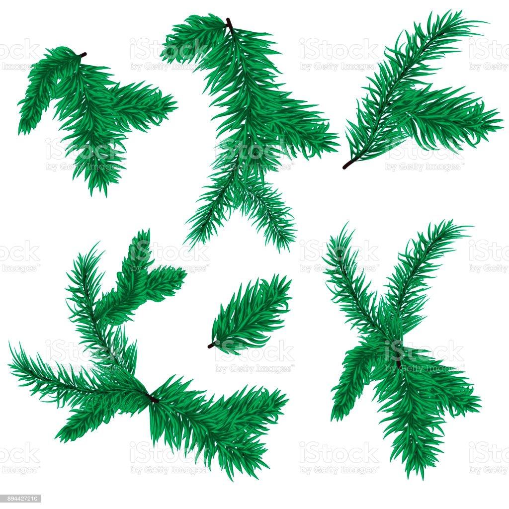 Christmas Branch Vector.Fir Tree Branch Vector Christmas Spruce Evergreen Nature