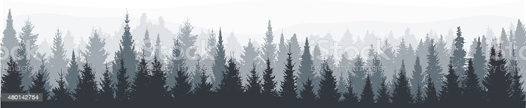 Fir tree forest panorama vector art illustration