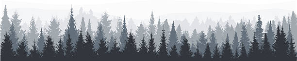 fir tree forest panorama - forest stock illustrations