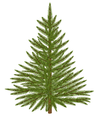 Fir tree. Ralistic christmas tree isolated on white background.