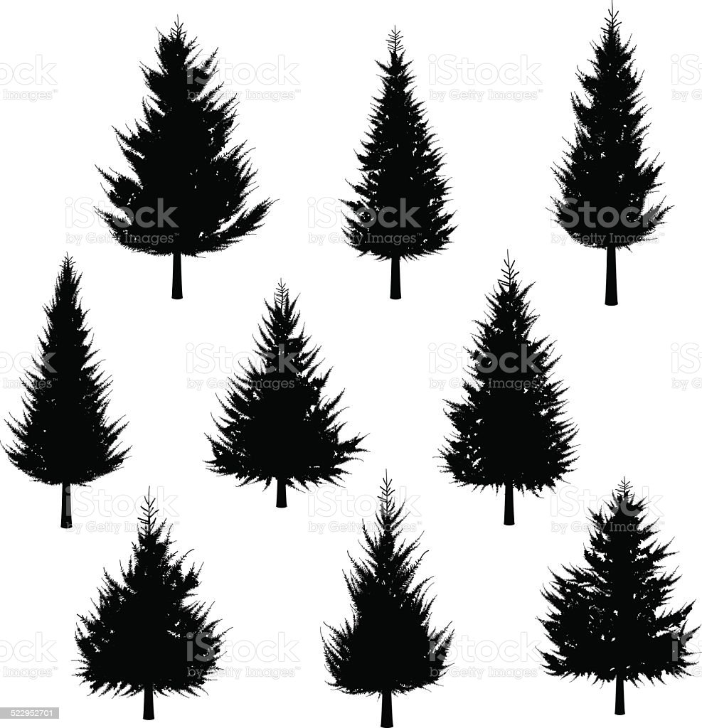 Fir tree silhouette[for Christmas tree] vector art illustration
