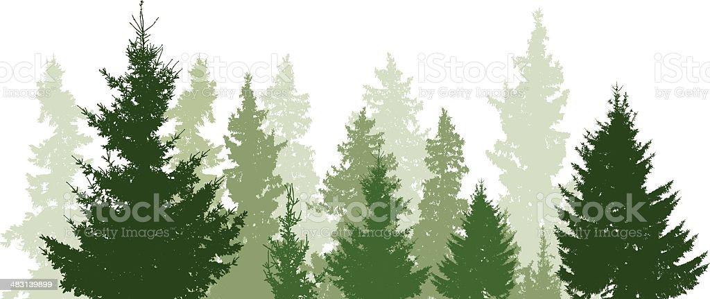 Fir trees landscape vector art illustration