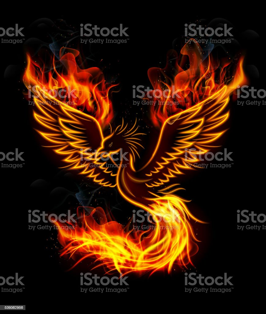 Fire burning Phoenix Bird with black background vector art illustration