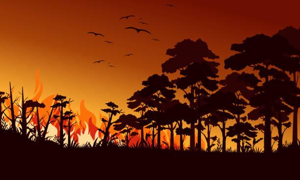 stockillustraties, clipart, cartoons en iconen met brand in forest platte vector illustratie. vogels vliegen over vuur vlam. wildfire landschap, wildland. natuurlijke ecologie ramp. brandende bomen en blaze hout 's nachts. vlamend bos. - illustraties van bosbrand
