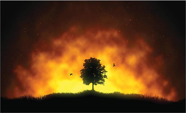 bildbanksillustrationer, clip art samt tecknat material och ikoner med fire - skog brand