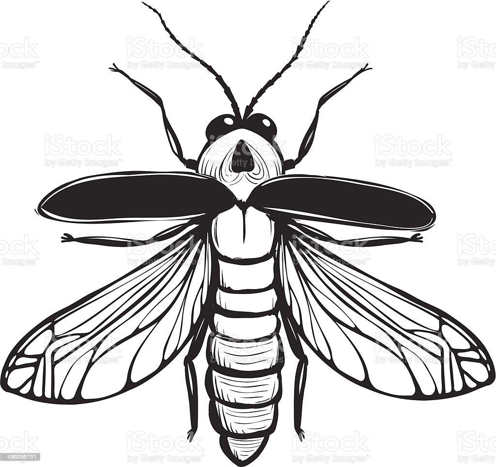 Ilustración de Firefly Insecto Negro Inky Dibujo y más banco de ...