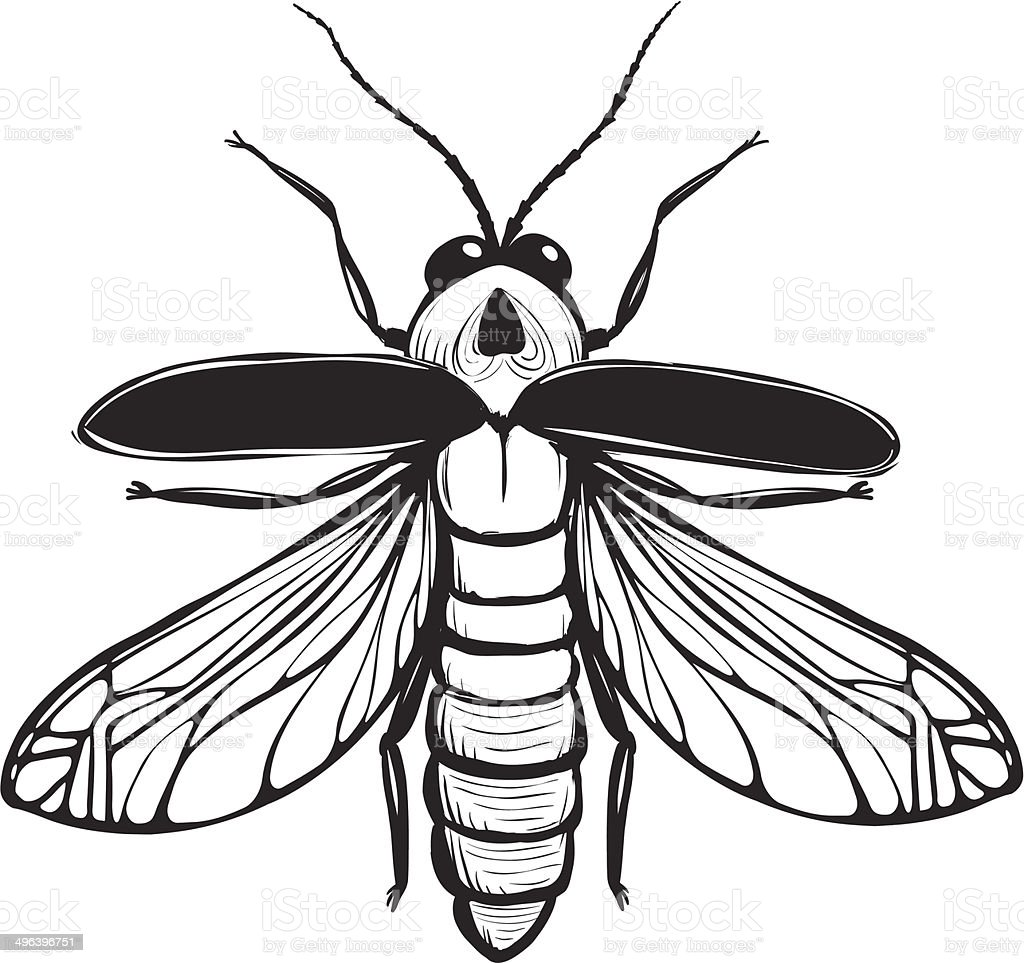 Firefly Insect Black Inky Drawing vector art illustration