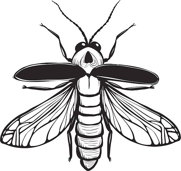 Firefly Illustrations, Royalty-Free Vector Graphics & Clip ...