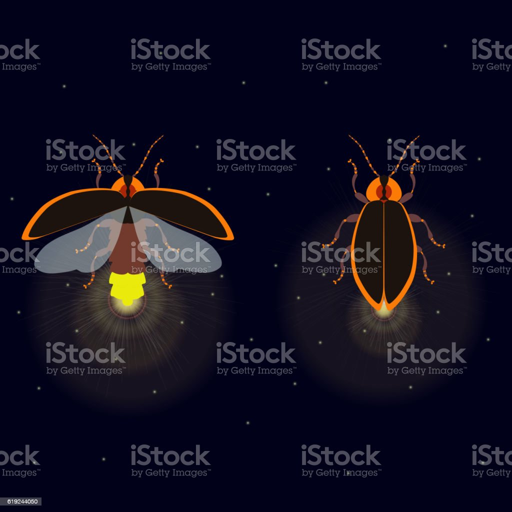 Firefly with open and closed wings vector art illustration
