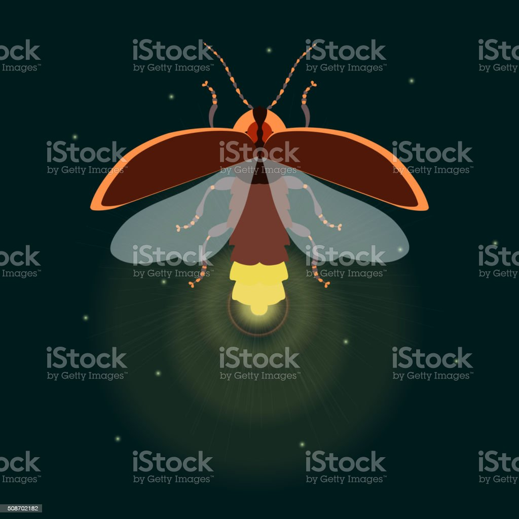 Firefly with open wings vector art illustration
