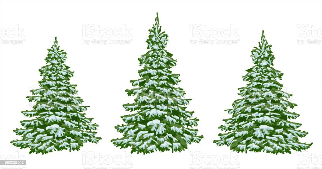 Firs In The Snow A Set Of Christmas Trees With Snow Isolated Festive