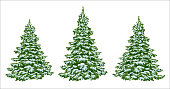 Firs. set of beautiful Christmas trees in the snow. Christmas. Winter. Nature in details. Drawing. Vector. Eps 10.