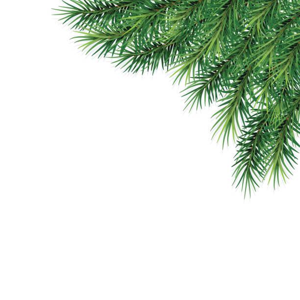 gałęzie jodłowe- świąteczny design. zbliżenie. odizolowany. boże narodzenie. nowy rok.   ilustracja wektorowa . eps 10. - gałąź część rośliny stock illustrations