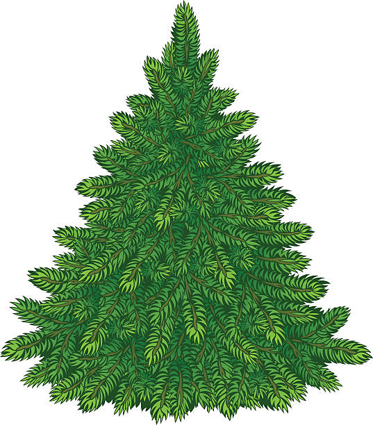 Bare Christmas Tree Clipart.Best Christmas Tree Bare Illustrations Royalty Free Vector