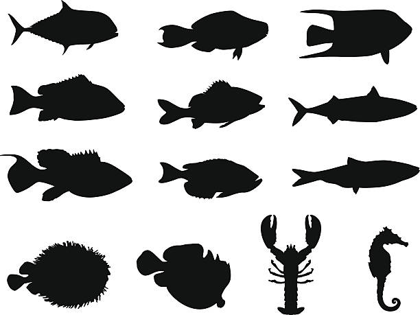 Fish and sea life silhouettes ; made in Adobe Illustrator http://www.bannerimage.com/istock/a_bw.gif arthropod stock illustrations
