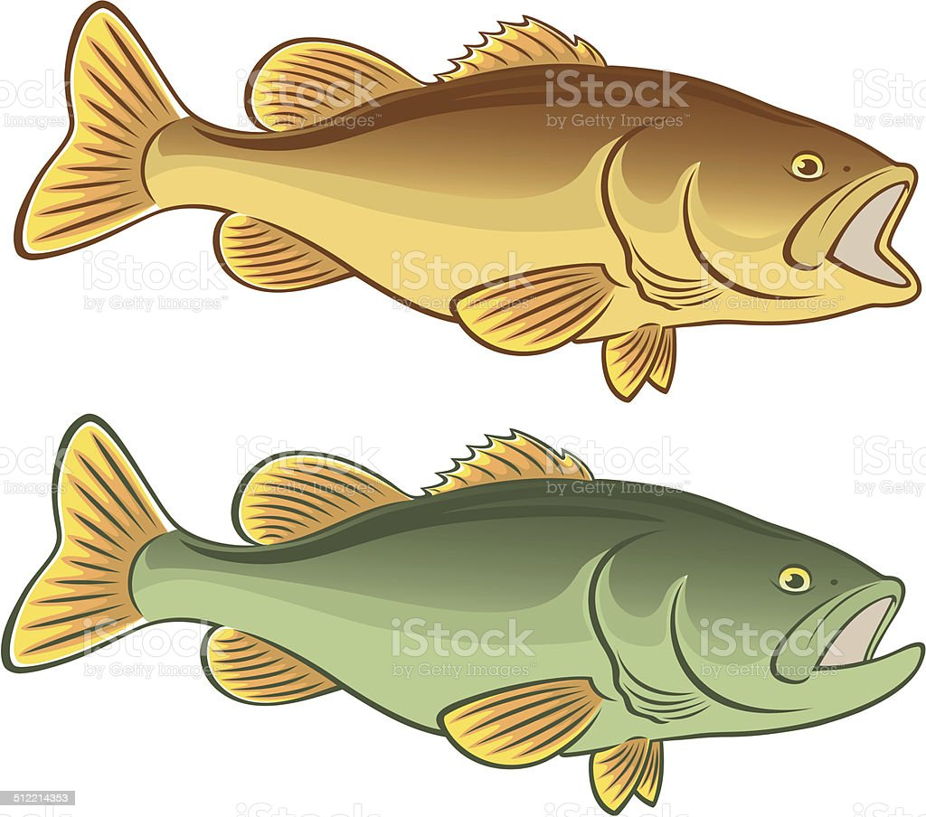 fish bass vector art illustration