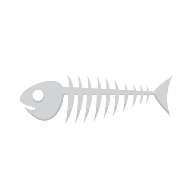 fish bone vector illustration of skeleton - animal bone stock illustrations
