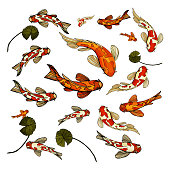 Fish carp Koi colorful set vector illustration. Goldfish, orange white with red spots fishes, top point of view. Watrelilly green leaves. Asian, japaneese pond, chineese, feng shui.