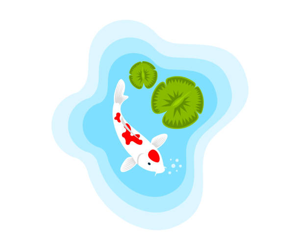 Fish, carp koi in a pond with water lilies, illustration. Aquaristics, marine life, animals and the underwater world, vector design, icon Fish, carp koi in a pond with water lilies, illustration. Aquaristics, marine life, animals and the underwater world, vector design, icon pond stock illustrations