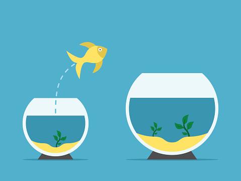 Fish changing aquarium