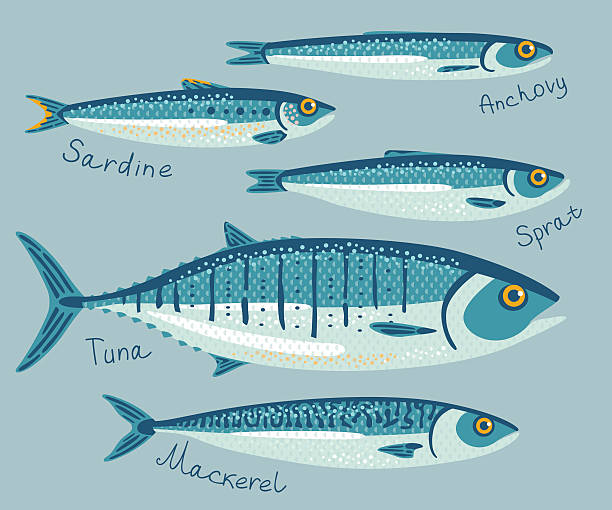 Fish collection for conservation. Vector illustration set with anchovy, sardine, sprat, tuna and mackerel fishes for preservation. Seafood packaging concept. anchovy stock illustrations