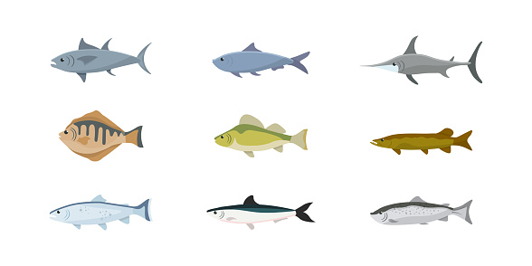 Fish flat illustrations set