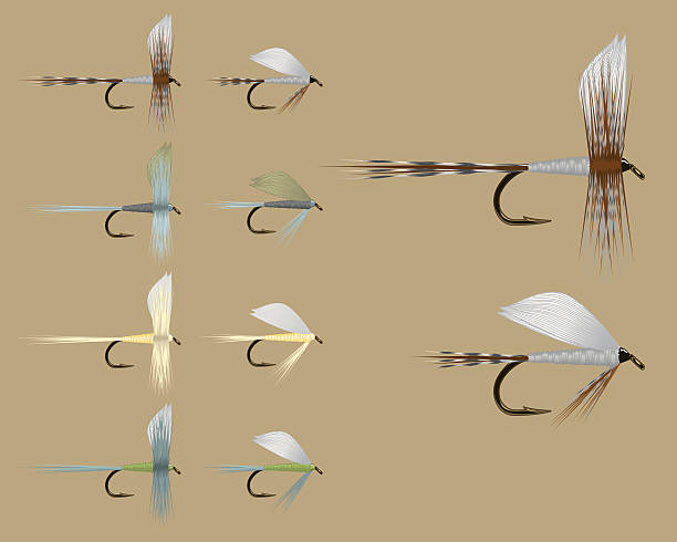 Fish Fly Assortment - Set One vector art illustration