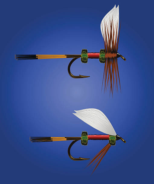 Fish Fly - Royal Coachman vector art illustration
