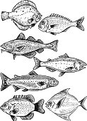 Fish illustrations isolated on white background. Fresh seafood. Vector illustration