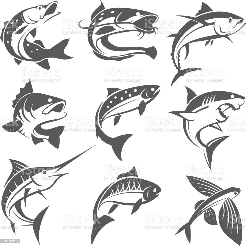 fish illustrations set vector art illustration
