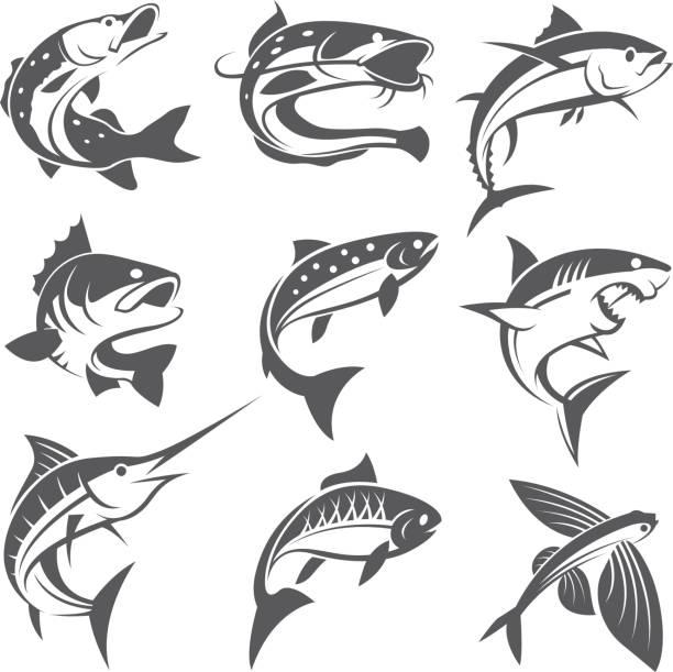 fisch-illustrationen-set - seehecht stock-grafiken, -clipart, -cartoons und -symbole