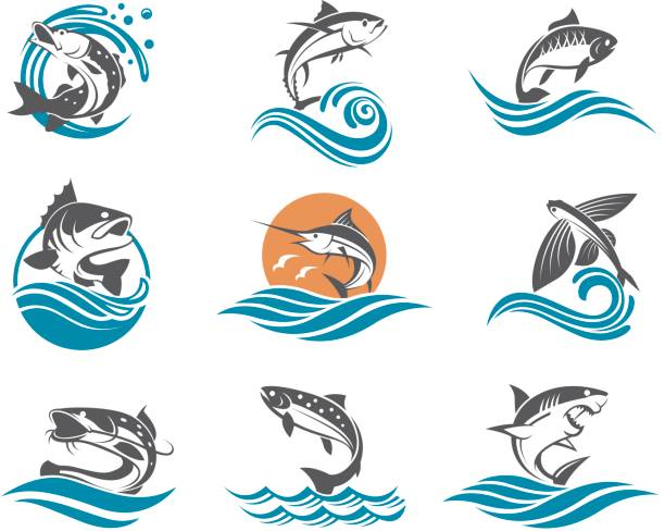 fish illustrations set collection of different fish types with waves pike fish stock illustrations