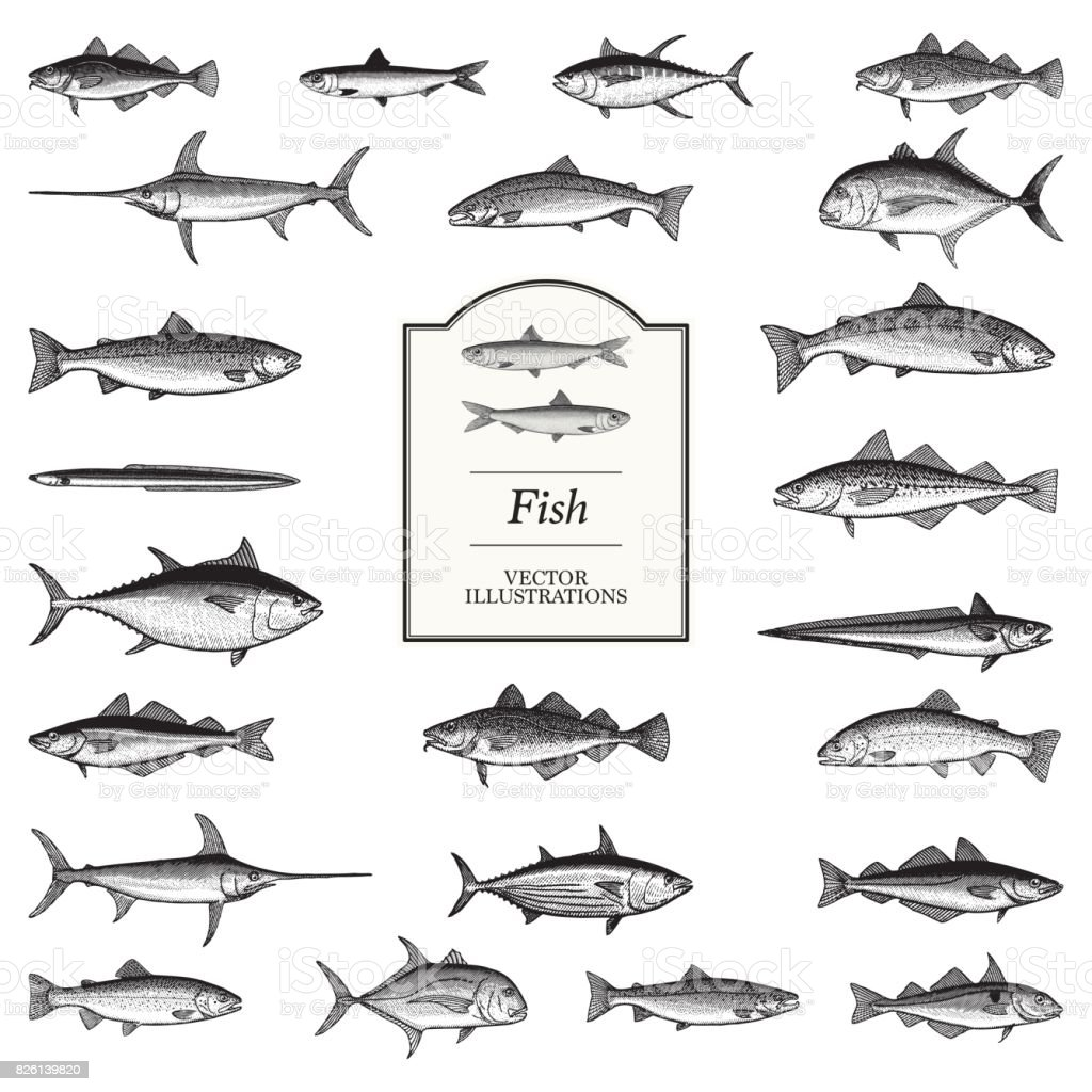Fish Illustrations vector art illustration