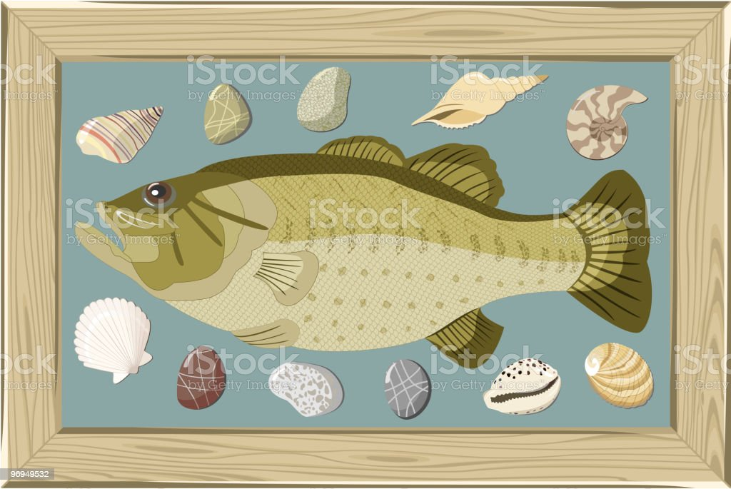 Fish in frame royalty-free fish in frame stock vector art & more images of animal shell