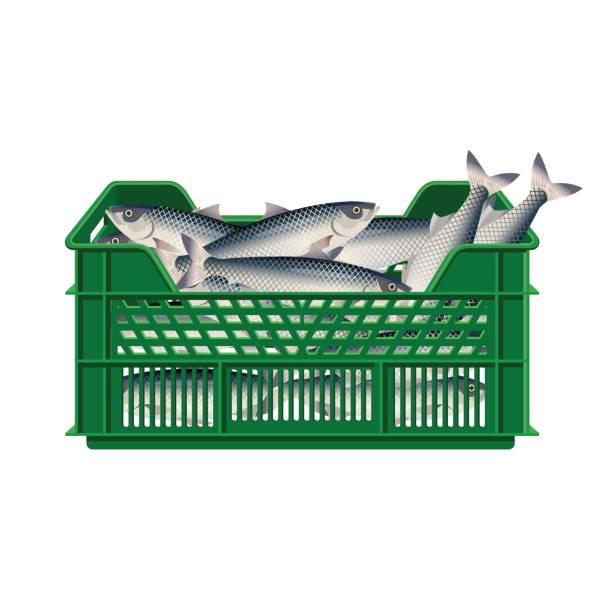 ilustrações de stock, clip art, desenhos animados e ícones de fish in plastic crate - aquacultura