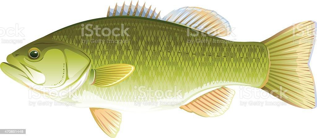Fish Largemouth Bass vector art illustration