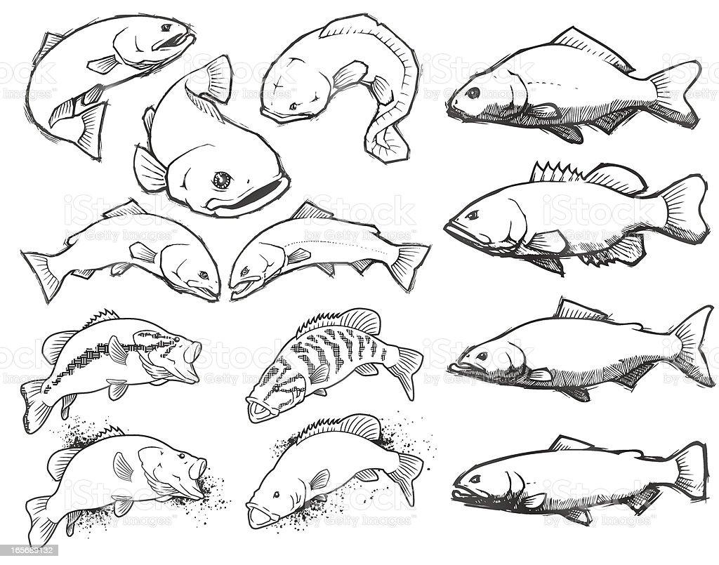 Fish: Pencil Sketch Set royalty-free fish pencil sketch set stock vector art & more images of animal