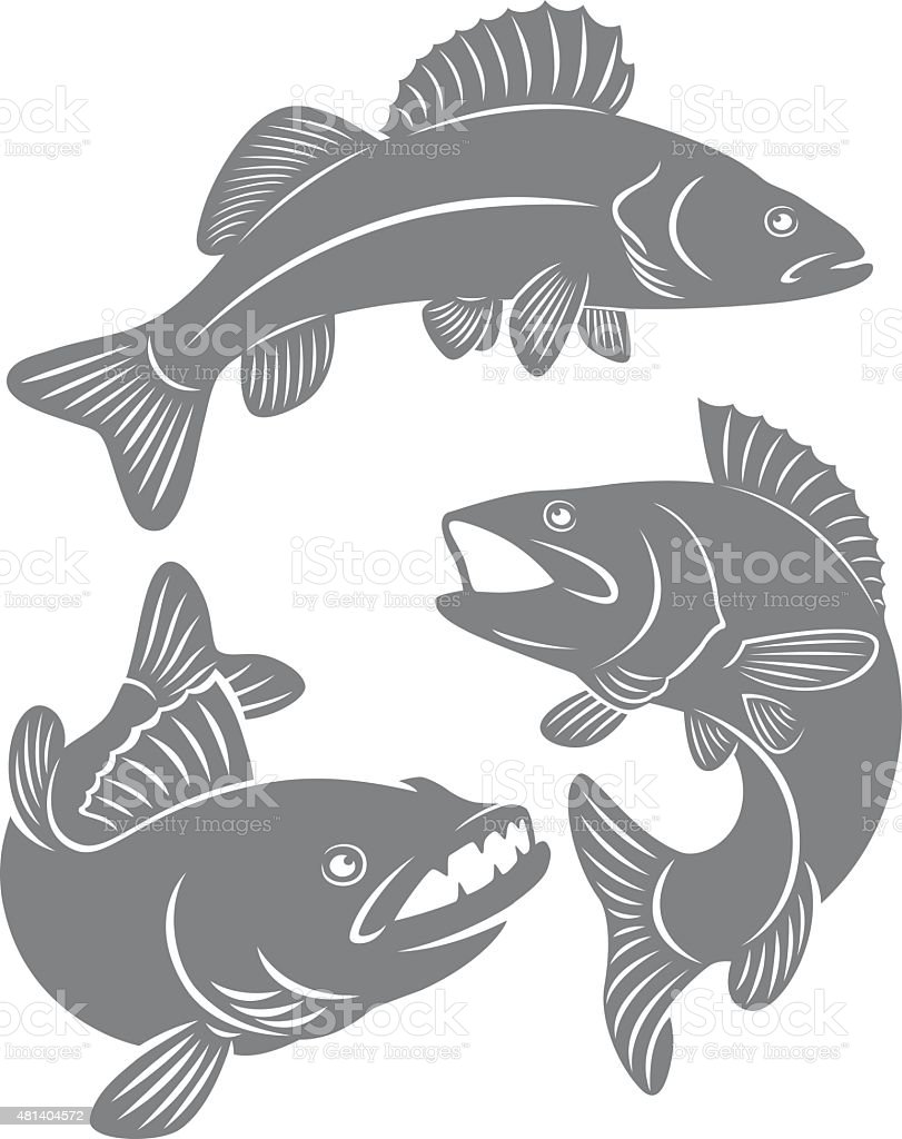 fish perch vector art illustration