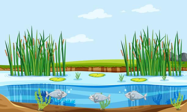Fish pond nature scene Fish pond nature scene illustration pond stock illustrations