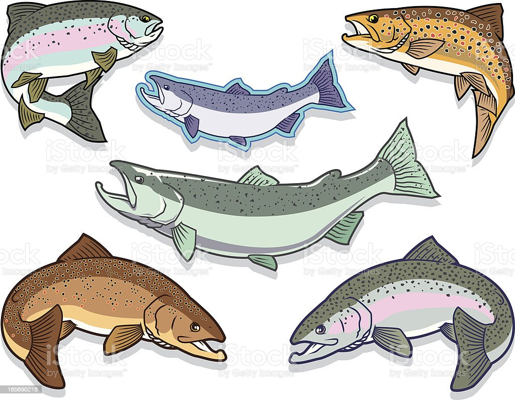 Fish: Salmon and Trout Set royalty-free fish salmon and trout set stock vector art & more images of animal