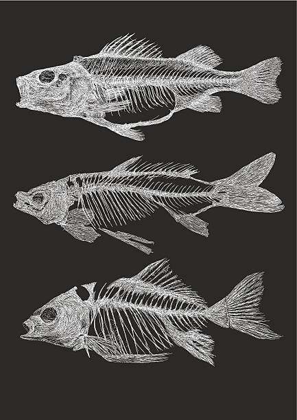 fish skeletons - fish skeleton stock illustrations, clip art, cartoons, & icons