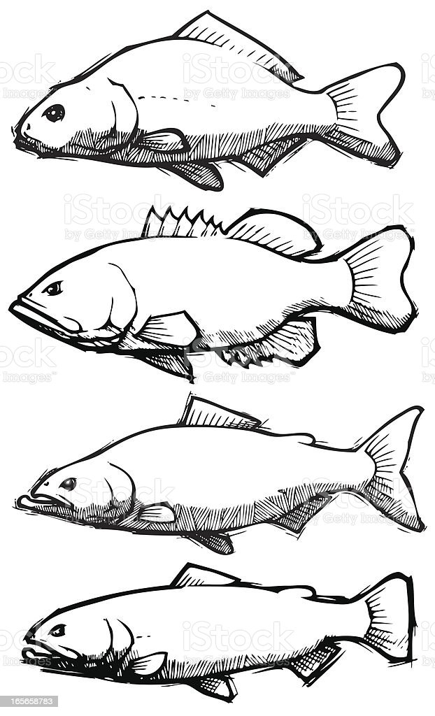 Fish: Sketch Collection royalty-free fish sketch collection stock vector art & more images of animal