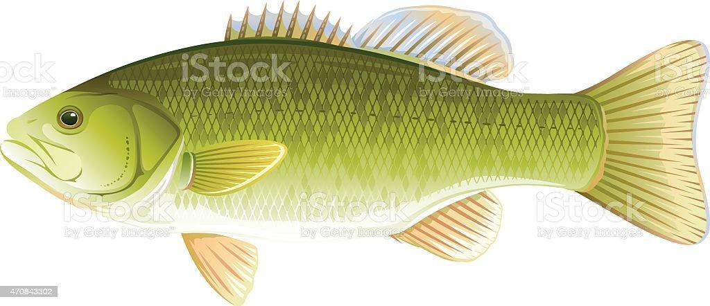 Fish Smallmouth Bass vector art illustration